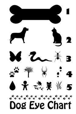 Dog-eye-chart