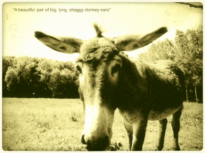 Big-ears-donkey